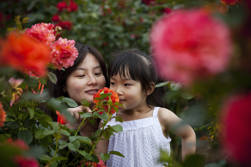 Family at Victoria State Rose and Garden Show smelling roses